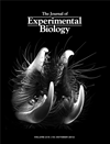 Cover of the Journal of Experimental Biology, October 2012
